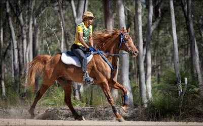 Horse Riding - Mary Valley Adventure Trails Noosa Hinterland, Australia.
