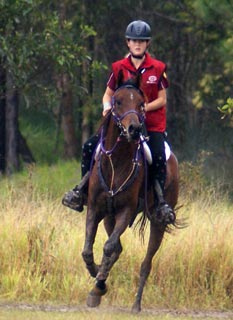Mary Valley Adventure Trails provide Guided Horse Riding Tours through Queensland's rainforest and farmland in the Noosa Hinterland's scenic Mary Valley.