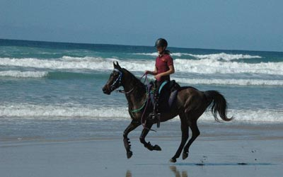 Horse Riding on the beach at Noosa.